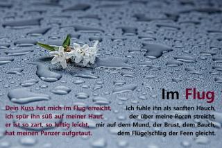 im_flug